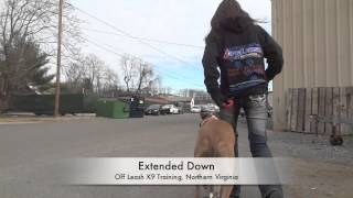 """Pit Bull """"ernie"""" Before And After Video! Dog Training, Northern Virginia"""