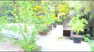 Organic terrace garden - Alwarpet