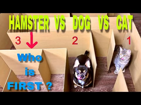 Maze, Cat, Dog & Hamster - Who's Gonna Be The Best?