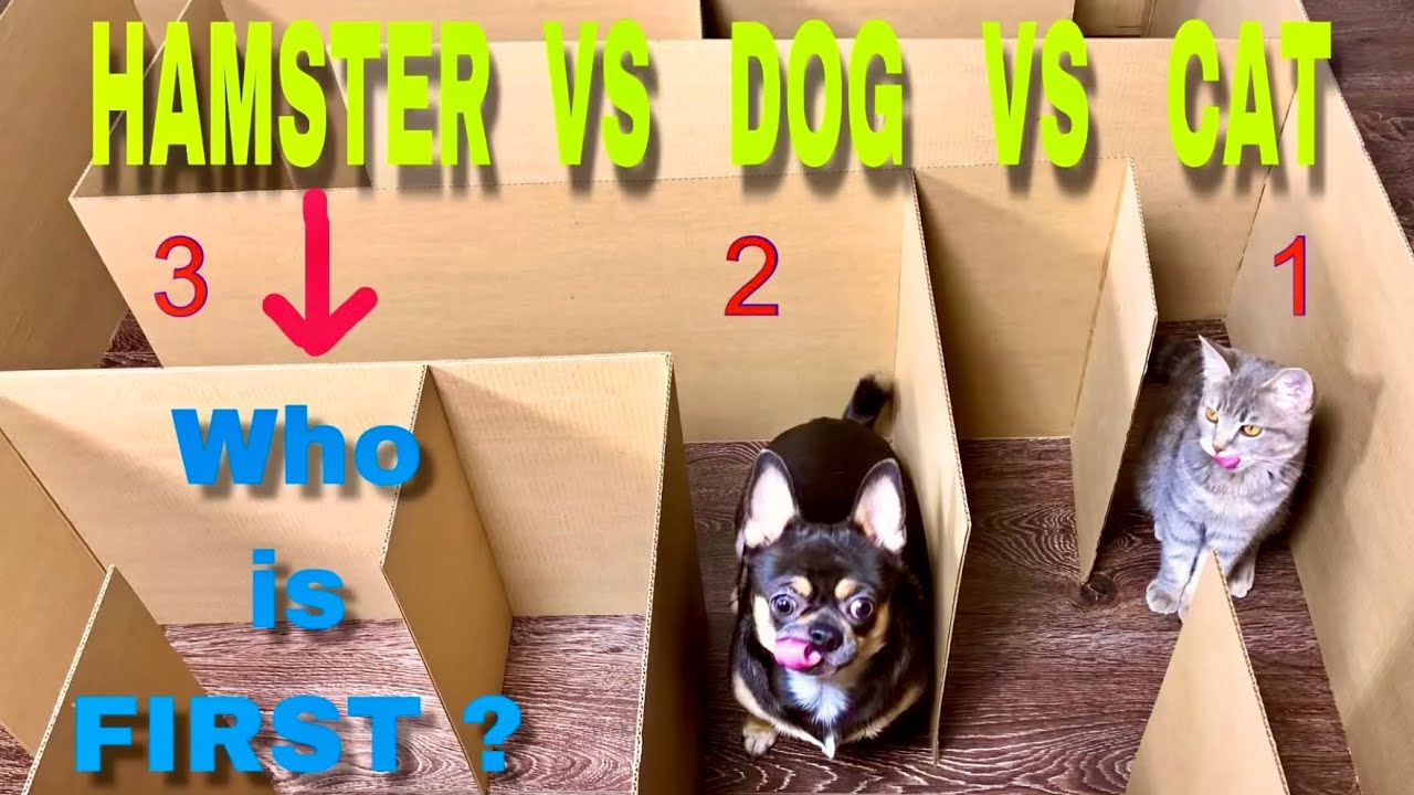 Giant Maze. Cat vs Dog vs Hamster. Who is the BEST?
