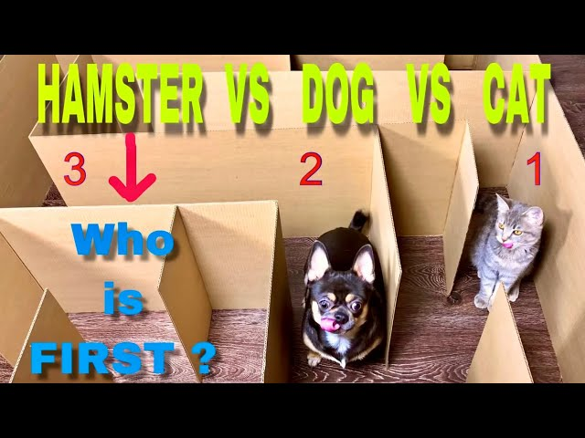 Giant Maze. Cat vs Dog vs Hamster. Who is the BEST?