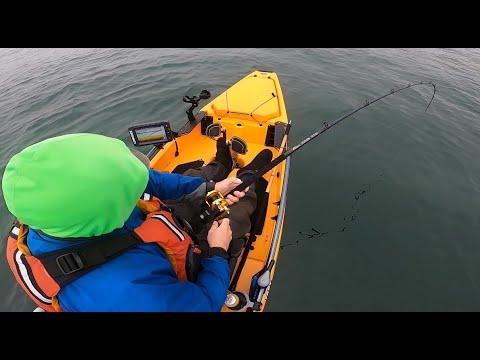 Summer Yellowtail Fishing   Carolina Rig Tips   Kayak Fishing La Jolla