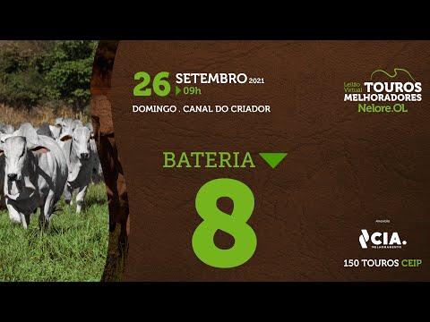 BATERIA 8 - LEILÃO VIRTUAL DE TOUROS 2021 NELORE OL - CEIP