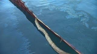 Европейские ученые накормят бактерии нефтью - futuris(Разливы нефти наносят урон экологии и экономике туристических регионов. Можно ли быстро убрать разлившуюс..., 2014-03-31T14:37:24.000Z)