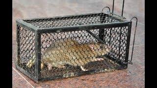 De les van de muizenval (Zac Poonen)