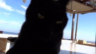 Really dramatic CAT - Turn on the speakers! - 1000fps HD 1080p - Crete - Kot