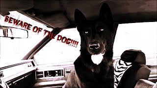 German Shepherd Attacks North Carolina:official Horror Preview