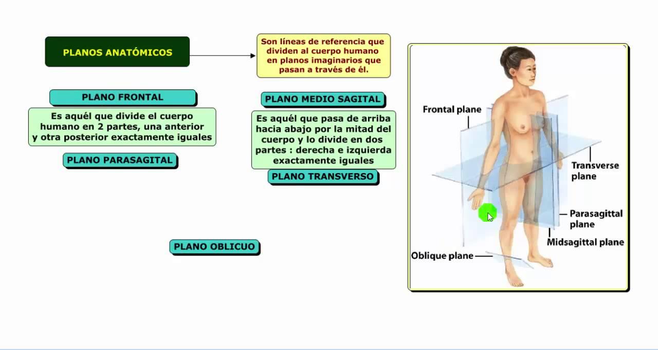 Planos del cuerpo humano doovi for Medidas ergonomicas del cuerpo humano