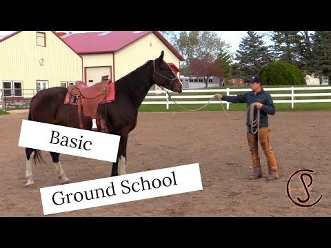Basic Ground Exercises for Horses 101...