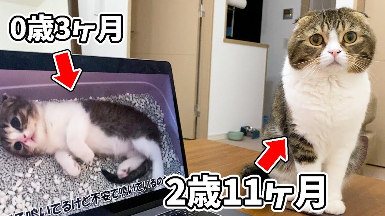 🐈猫に生後3ヶ月の自分と初対面させたら反応が感動的で泣けた…