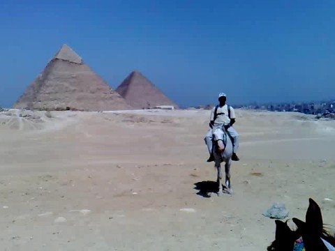 black panther in Egypt