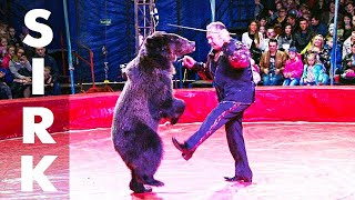 Dogs Bears Monkeys Animals Sirk Circus Show