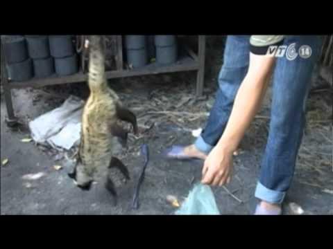 VTC14_108 loài động vật hoang dã bị rao bán trên Internet tại Việt Nam