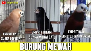 Download lagu BIKIN NGILER SUARA BURUNG INI SAKING BAGUSNYA🤤