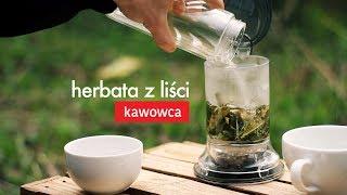 Herbata z liści kawowca KUTI. Czajnikowy.pl
