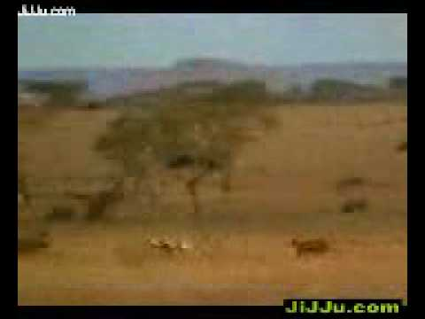 Cheeta-XDesi.Mobi