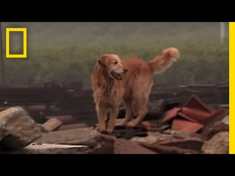 Working Dogs | National Geographic