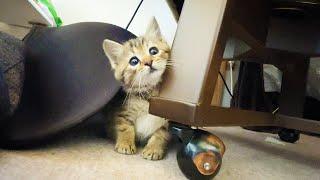 元気でやんちゃに育ってきた保護猫