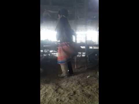 nkauj hmoob sex