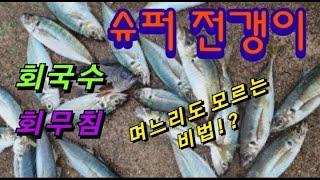 죽도시장급  전갱이  낚시 비법  회무침  회국수 바다…