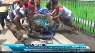 Video [ANTV] TOPIK Batu Bacan Seberat 1,7 Ton  Akhirnya Diserahkan Ke Pemerintah Kabupaten Halmahera download MP3, 3GP, MP4, WEBM, AVI, FLV Juni 2018