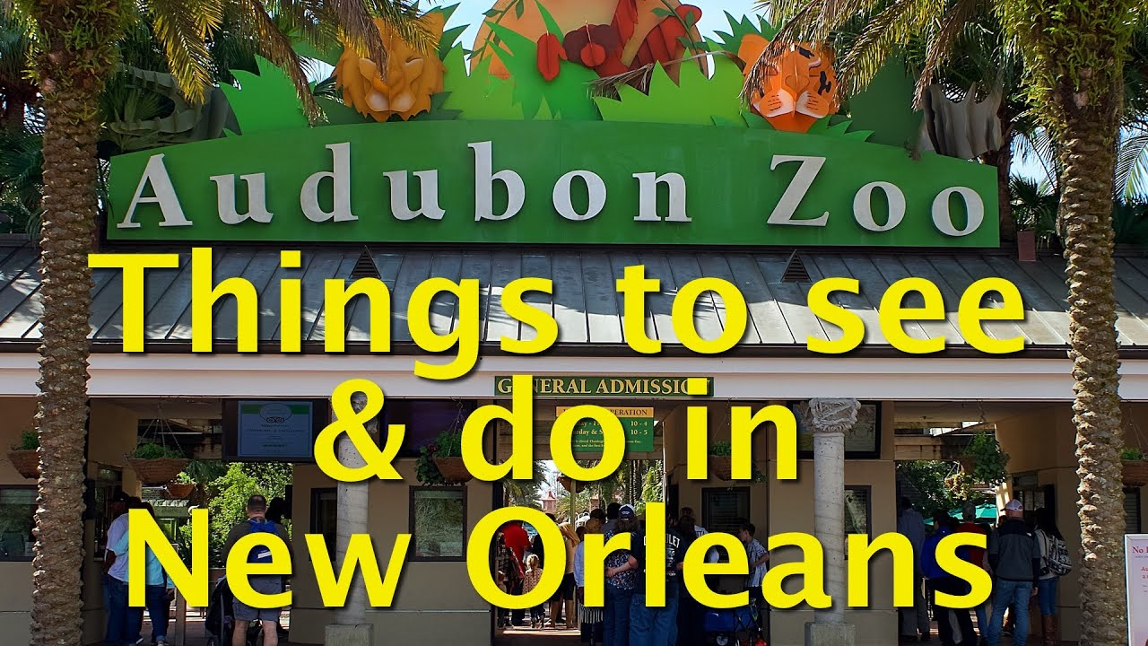 Things to do in new orleans visit audubon zoo youtube for Things not to miss in new orleans
