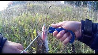 Ловля окуня на грушку и щуки на воблер - рыбалка не далеко от дома(Моя попытка поймать окуня на грушку(пулю) и щука на 1470 кг. Купить липгрип как у меня: http://ali.pub/gamwk., 2015-09-19T13:48:25.000Z)