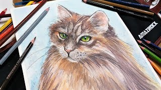 20+ Watercolor Pencil Hacks! // How to Paint a Long Haired Cat Real-Time Tutorial