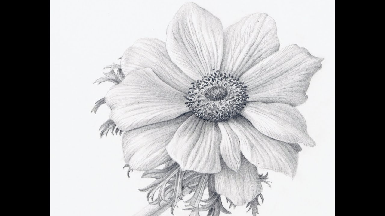 How to Draw Flowers Realistically - YouTube