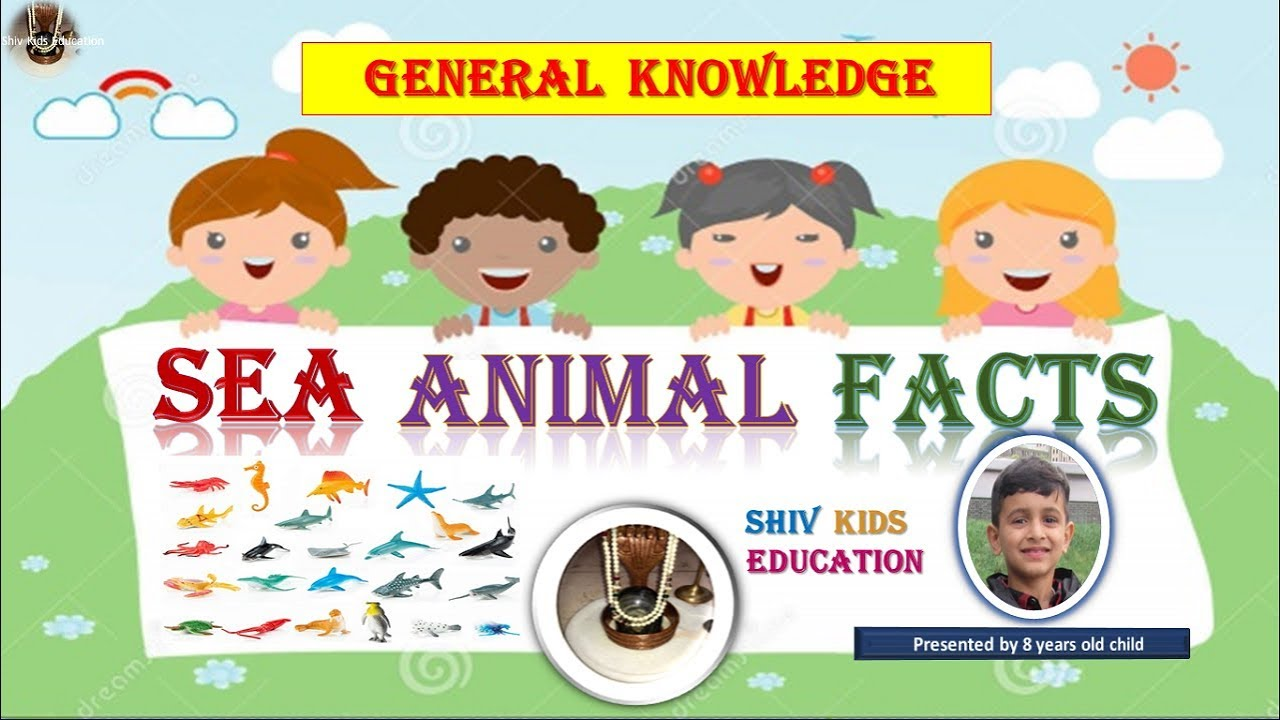 Sea Animal Facts Wacky Sea animal facts for kids and ...