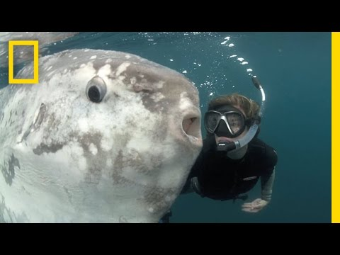Strange Sunfish And Hope For The Ocean | National Geographic