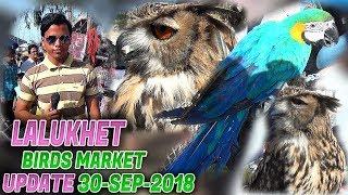 Lalukhet Sunday Birds Market 30-9-2018 Latest Updates (Jamshed Asmi Informative Channel)  Urdu/Hindi