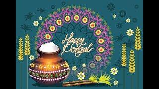 Happy Pongal 2019 | Happy Makar Sankranti 2019 Whatsapp Status, Messages Greetings | Happy Sankranti