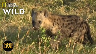 Safari Live - Day 254 | Nat Geo Wild