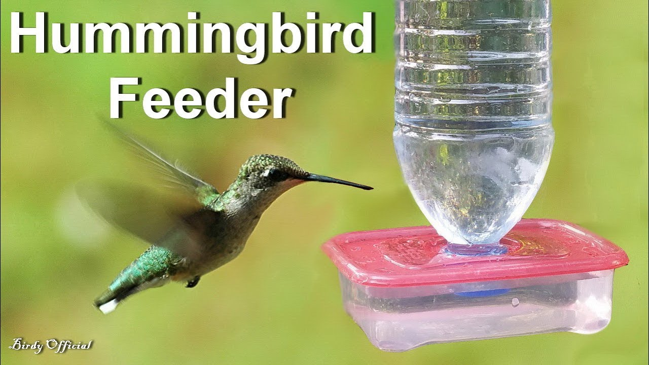 Hummingbird Feeder - How To Make A DIY
