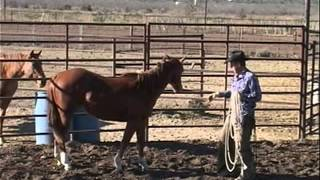 Training a Horse to be a Cowboy