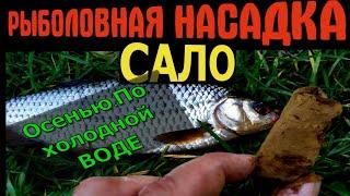 САЛО ДЛЯ РЫБАЛКИ УЛОВИСТЫЙ РЕЦЕПТ от СТАРОГО РЫБАКА Рыбалка на сало Насадка для карася леща плотвы