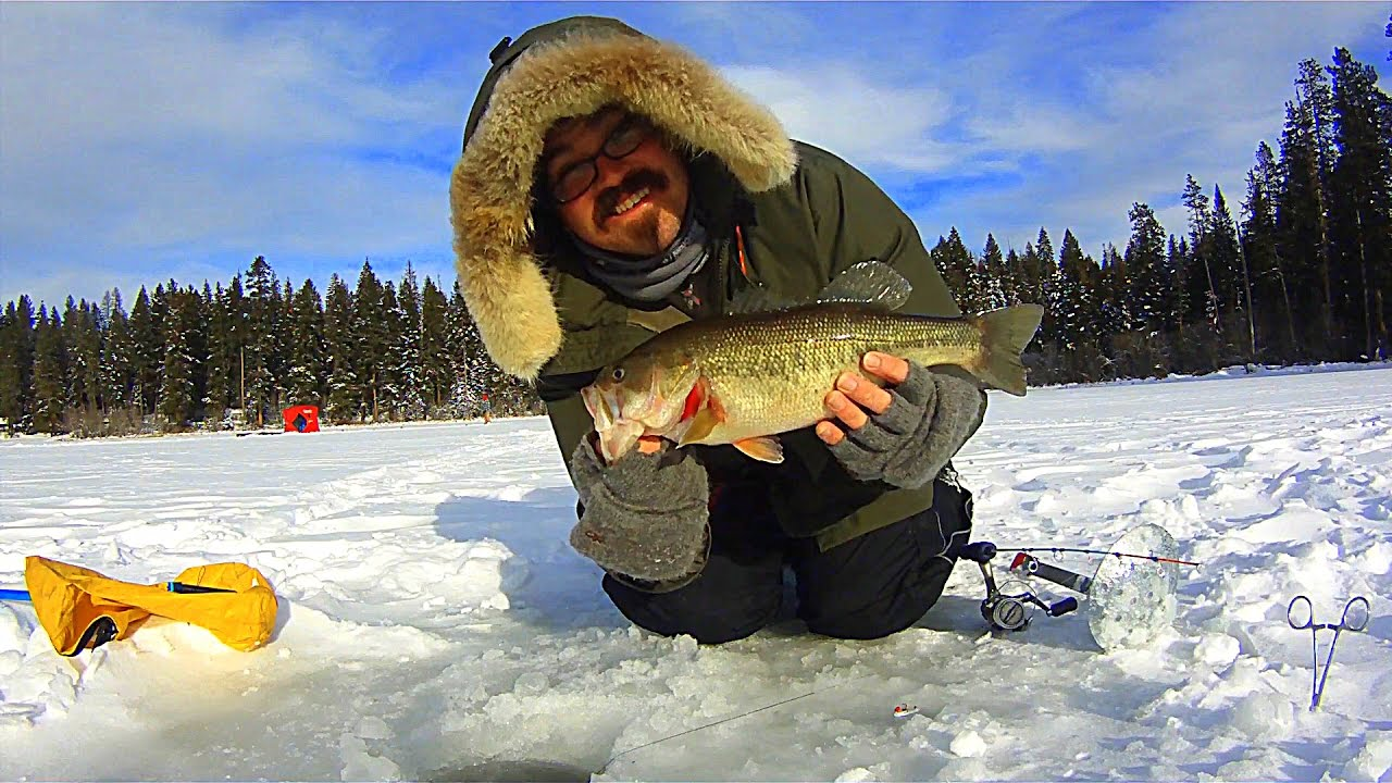 Am i a bass hole now ice fishing perch bass and crappie for Ice fishing for bass