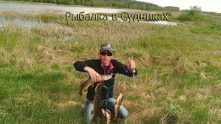 Шукаємо крупного окуня на платнікє Судники столбцовский район