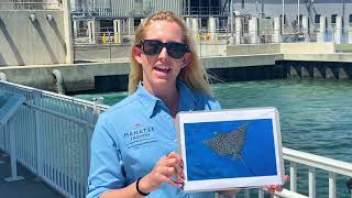 Virtual Class: Spotted Eagle Ray