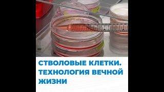 Стволовые клетки. Технологии вечной жизни