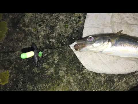 Fishing River Medway 30th December 2019