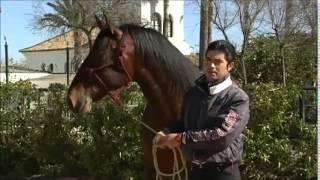 Reportaje sobre el caballo de Pura Raza Española en el programa Tierra y Mar (Marzo 2015)