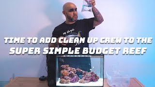 Let's Add Clean Up Crew To The Super Simple Budget Reef Ep5