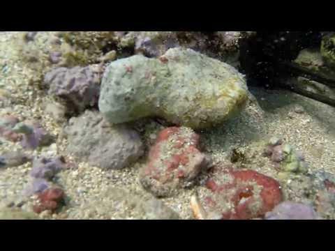 tako diving hawaii