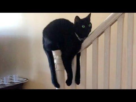 Download This Cat Is Broken | Funny Pet Videos