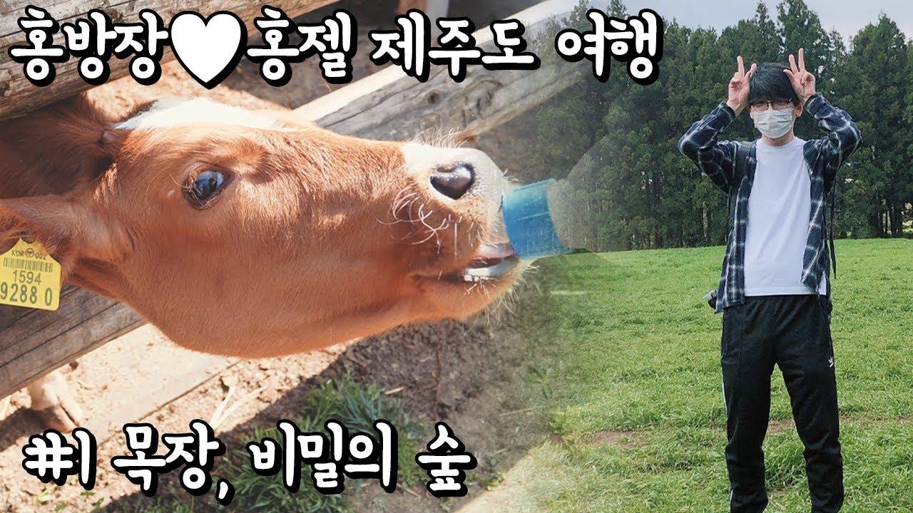 홍방장♥홍젤 제주도 여행 / 1화 아침미소목장, 안돌오름 비밀의 숲 4K UHD (Vlog Hong Bang Jang)[TRAVEL] - 홍방장