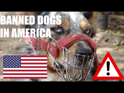 10 Banned Dogs In The U.S | Banned Fighting Dogs Breed