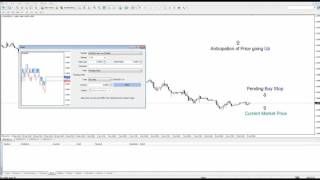 Forex how to Pending Order
