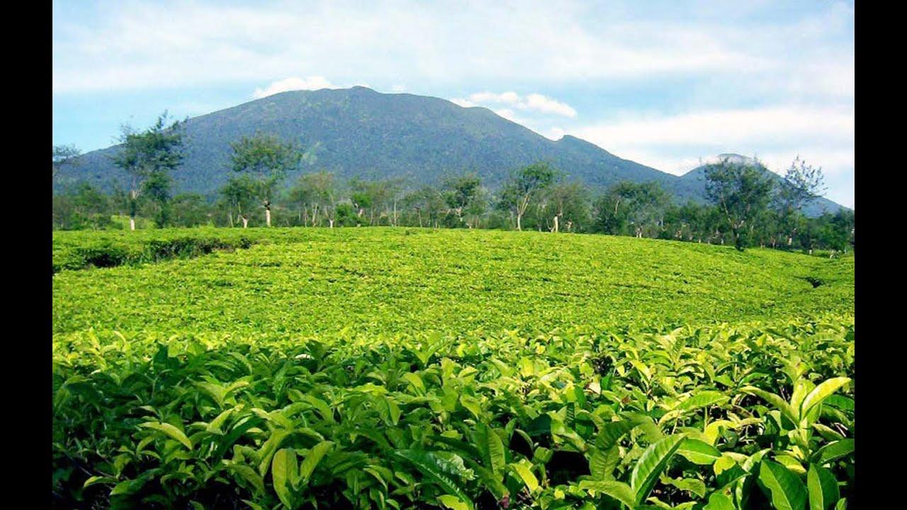 Image result for puncak perkebunan teh cisarua bogor